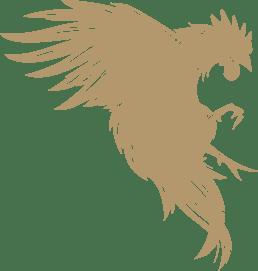 sleepless media rooster