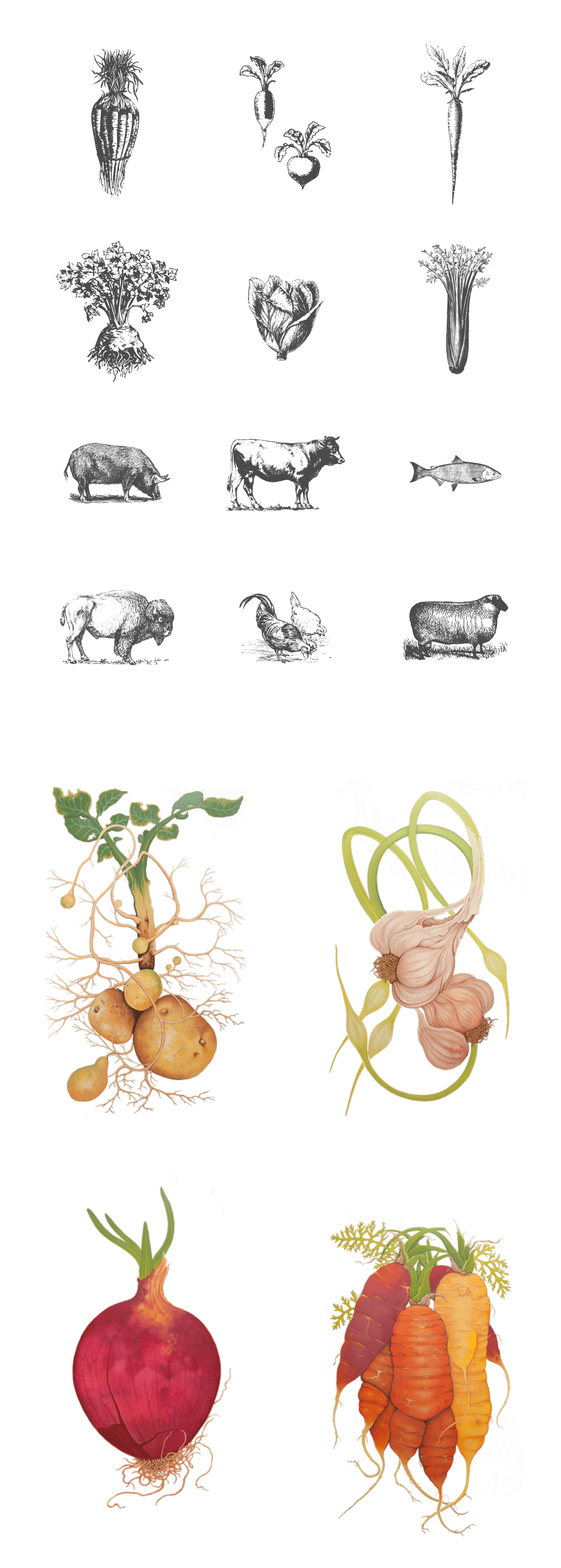 Wild Roots Illustrations