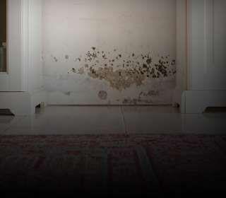 Detalhe de mancha de mofo na parede