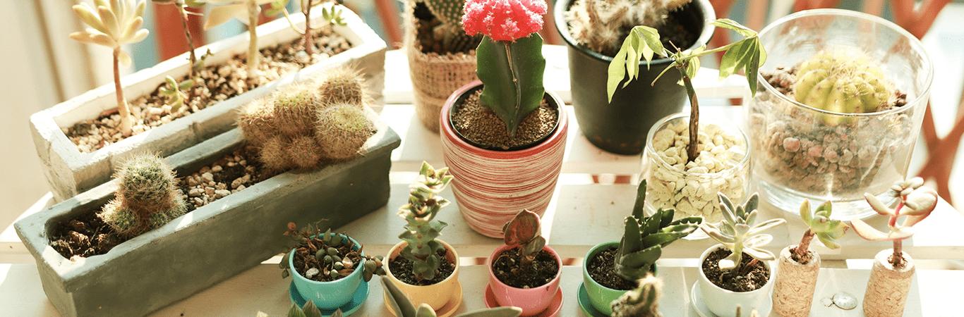 plantas header