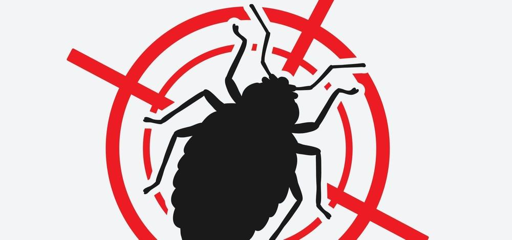 Why You Should Skip the Chemical Bed Bug Treatments!
