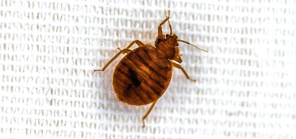 5 Ways to Improve Your Bed Bug Treatment Business