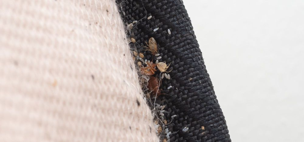 Don't Make These BIG Bed Bug Mistakes!