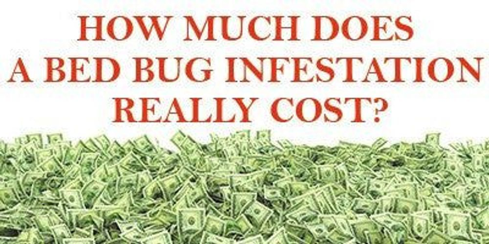 The True Bed Bug Treatment Costs for Your Business?