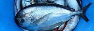 מאכלי ים - מתכונים