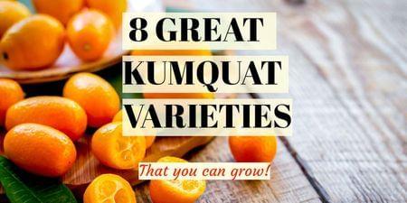 8 Great Kumquat Varieties-Four Winds Growing