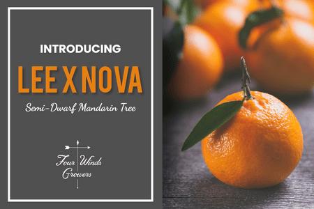 Introducing Lee x Nova Mandarin-Four Winds Growing