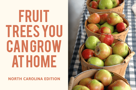 What Fruit Trees Can I grow In North Carolina?-Four Winds Growing