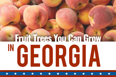 What Fruit Trees Can I grow In Georgia?-Four Winds Growing