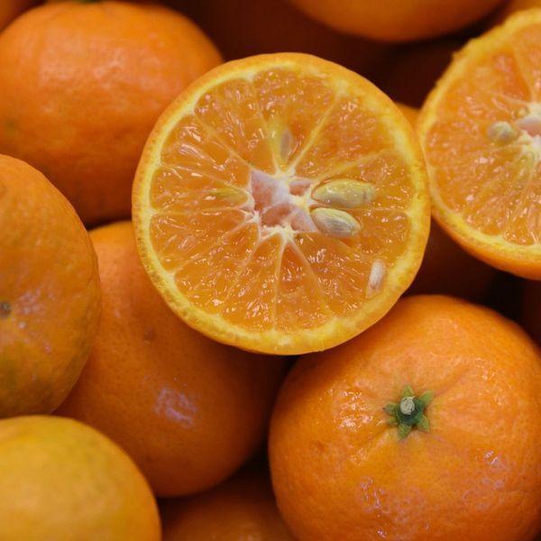 California Honey Semi-Dwarf Mandarin Tree