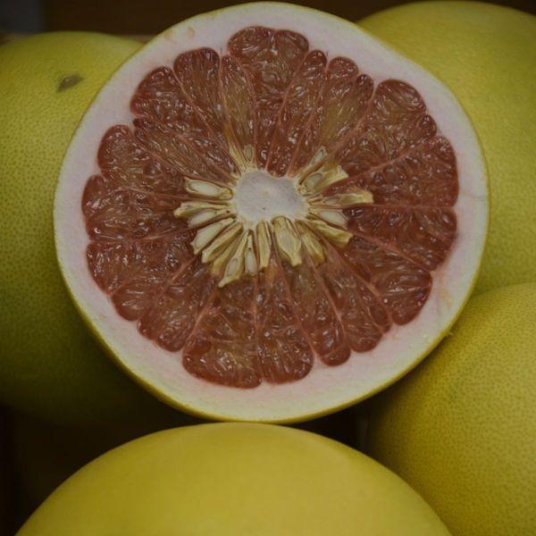 Chandler Pummelo Semi-Dwarf Grapefruit Tree