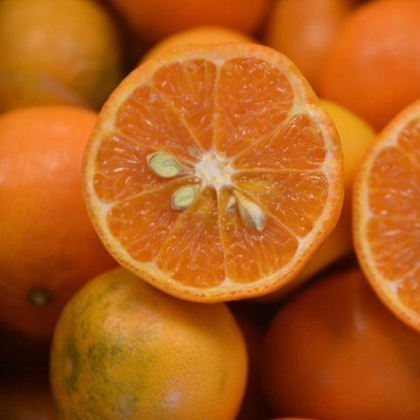 Kinnow Semi-Dwarf Mandarin Tree