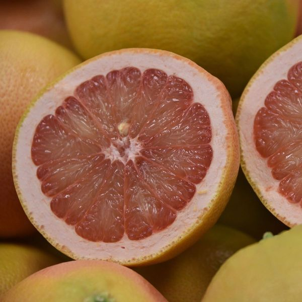 Rio Red Semi-Dwarf Grapefruit Tree