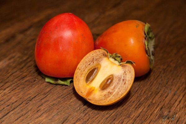 Chocolate Persimmon Tree