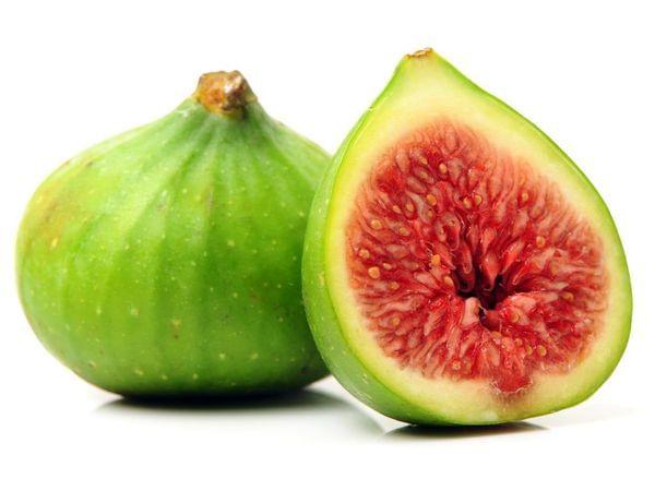 Conadria Fig Tree