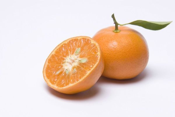 Dancy Semi-Dwarf Tangerine Tree