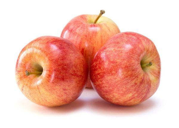 Gala Apple Tree
