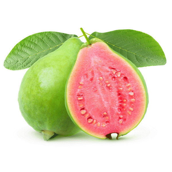 Tropical Pink Guava Tree