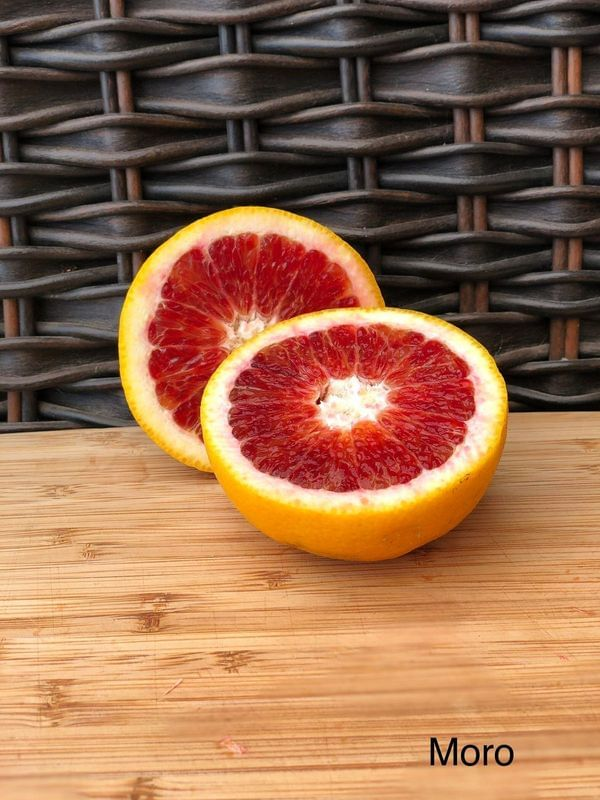 Moro Blood Semi-Dwarf Orange Tree
