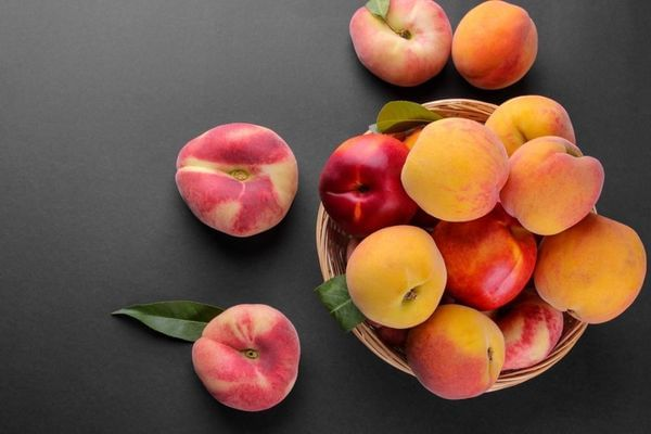 Peach- Multi Budded Fruit Tree Low Chill