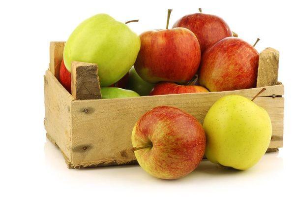 Apple - Multi Budded Fruit Tree