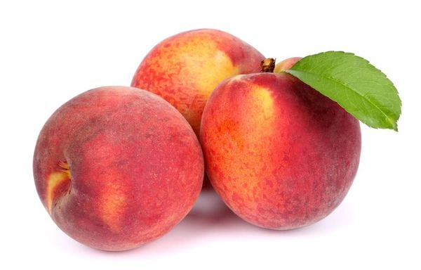 O'Henry Yellow Peach Tree