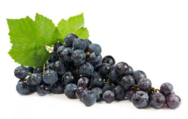 Pinot Wine Grape Vine