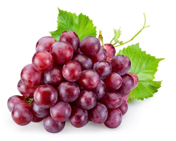 Ruby Seedless Grape Vine