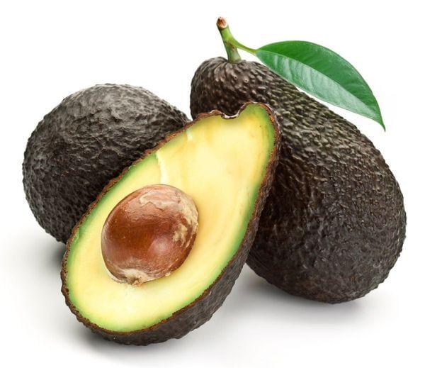 Hass Avocado Tree (PRE-ORDER)