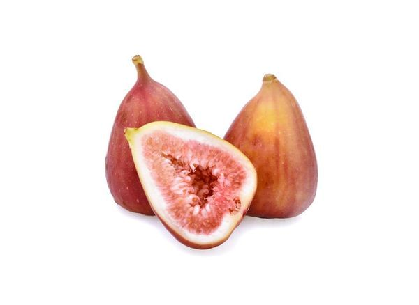 Flanders Fig Tree