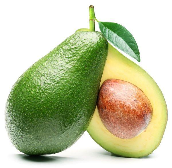 Holiday Avocado Tree