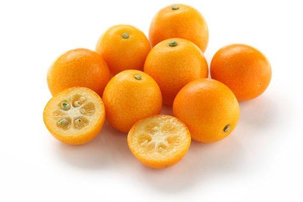 Marumi Semi-Dwarf Kumquat Tree