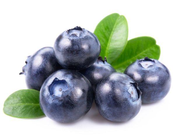 Jubilee Blueberry Bush