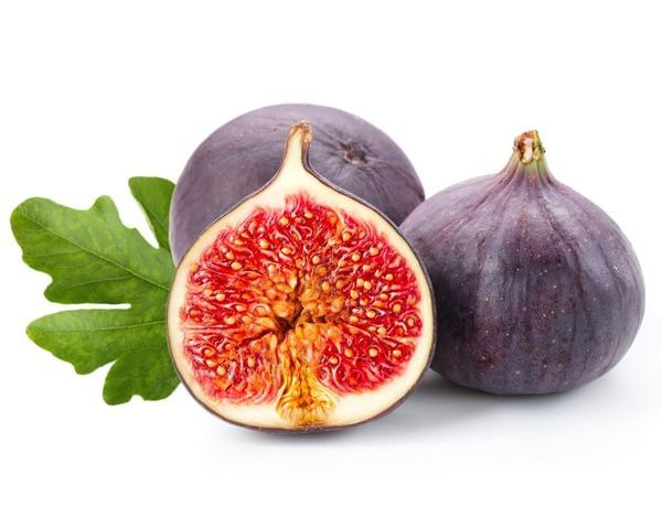 Purple Smyrna Fig Tree