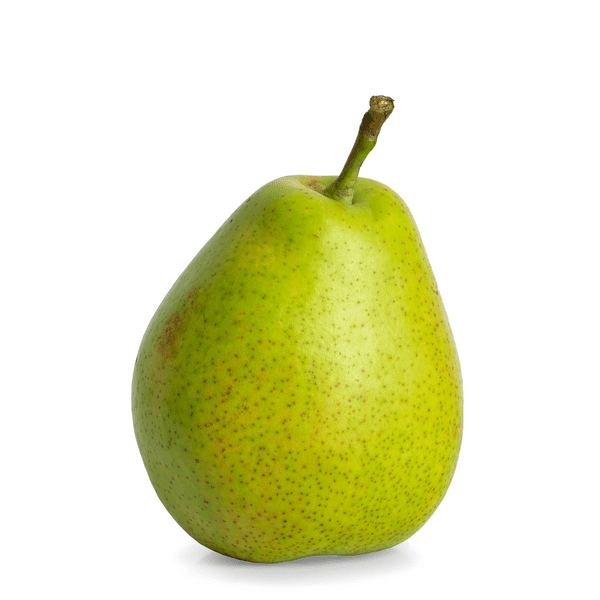 D'Anjou Pear Tree