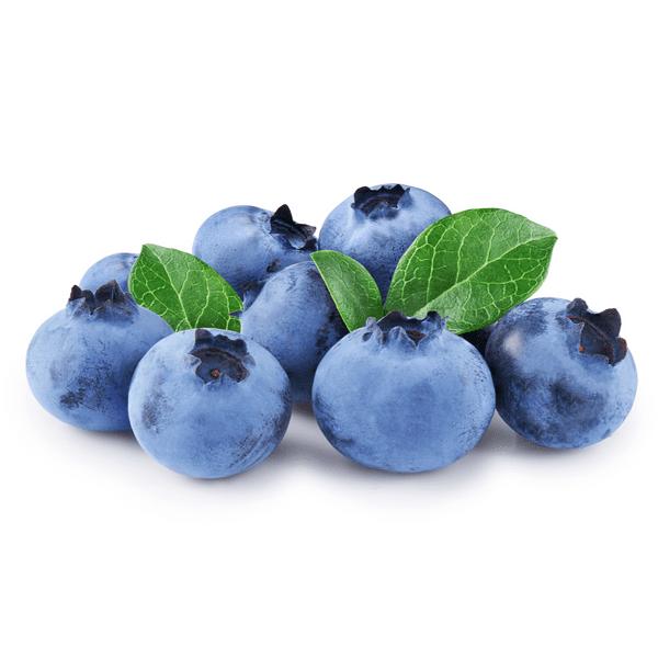 Biloxi Blueberry Bush