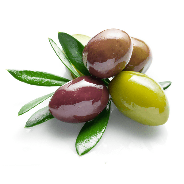 Taggiasca Olive Tree