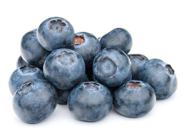 Sharpblue Blueberry Bush
