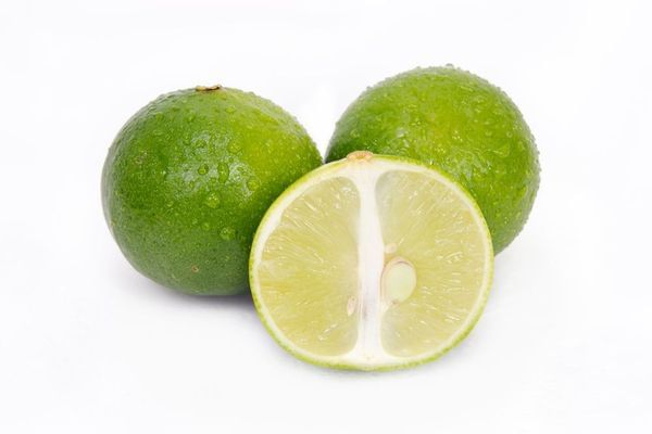 Mexican Thornless Semi-Dwarf Lime Tree