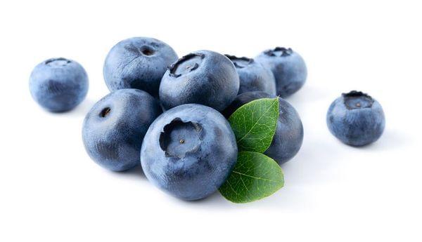 Southmoon Blueberry Bush