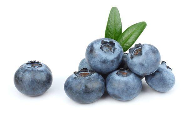Sunshine Blue Blueberry Bush