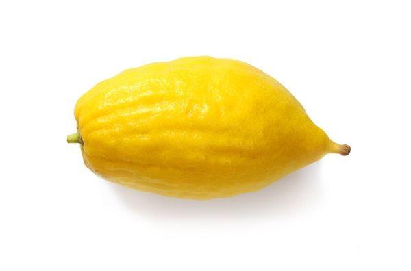 Etrog/ Ethrog Semi-Dwarf Citron Tree