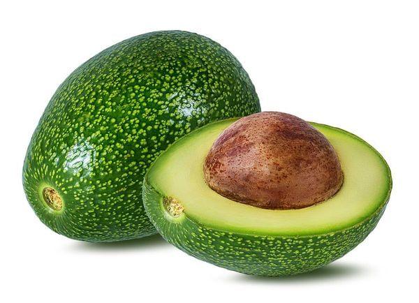 Little Cado Avocado Tree