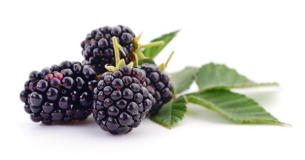 Black Satin Thornless Blackberry Bush