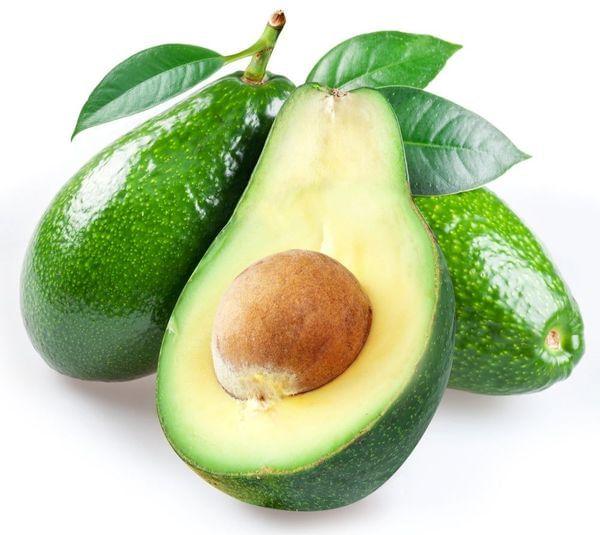 Fuerte Avocado Tree