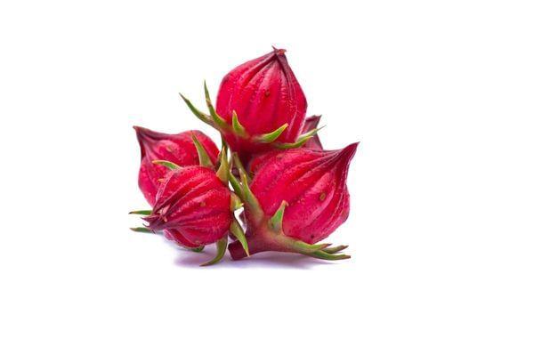 Zinger Hibiscus 'Roselle' Plant