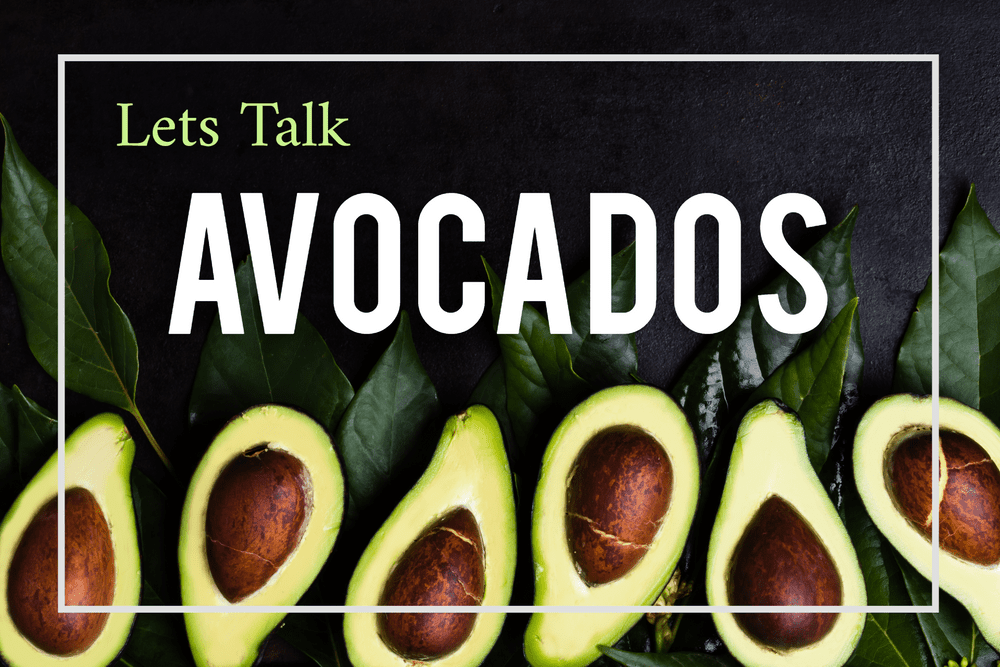 Let's Talk Avocado Trees Featured