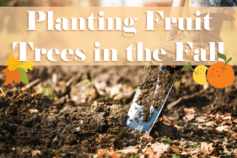 Planting Fruit Trees in the Fall! Featured