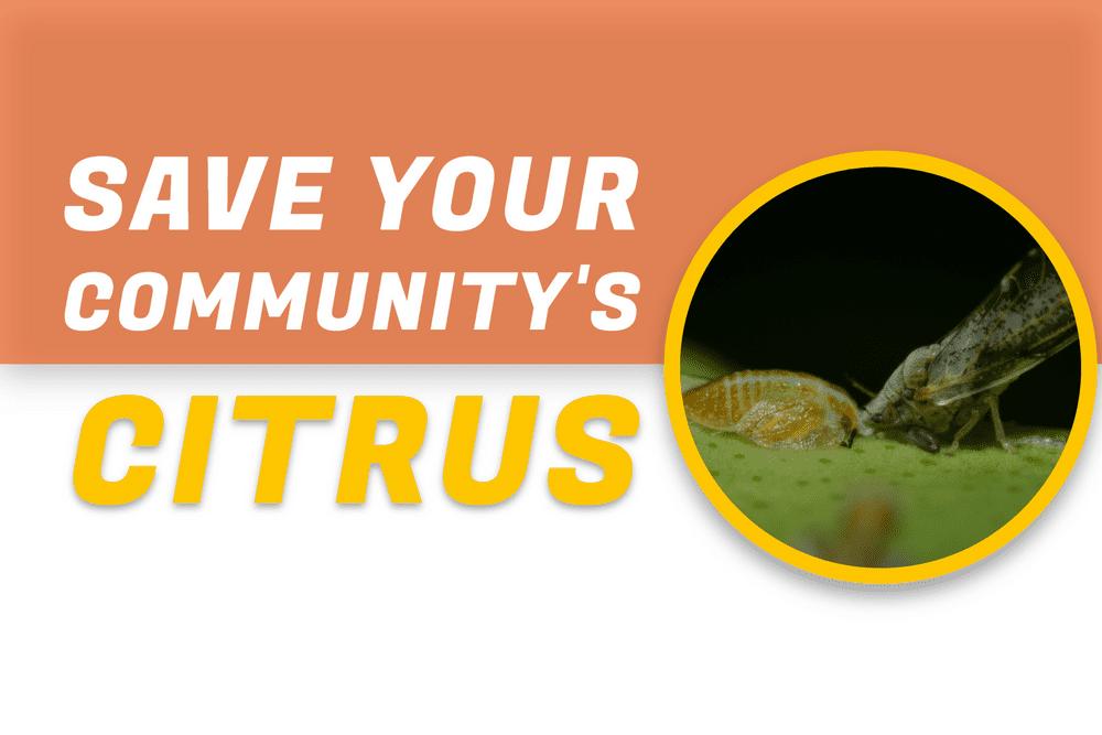 Citrus Greening Disease / HLB (Huanglongbing) Featured