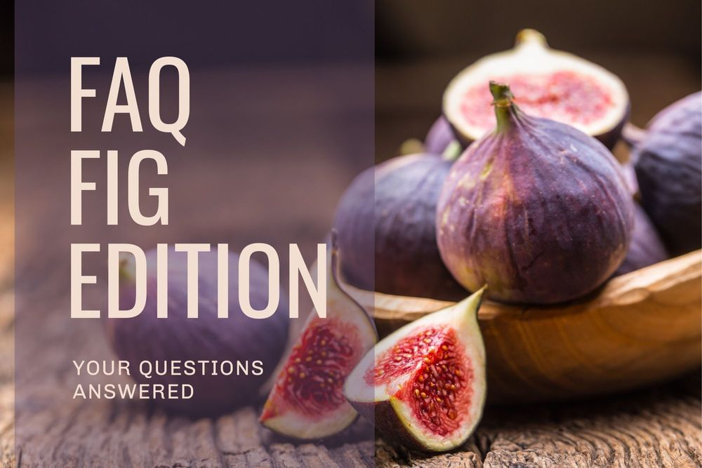 FAQ's: Fig Tree Edition Featured